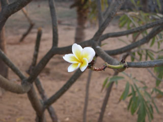 Garden_lone_white