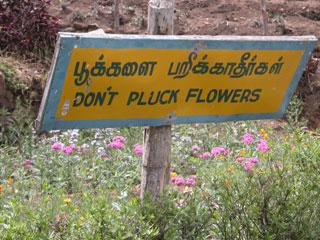 Kodai_flowers_pluck2_1162