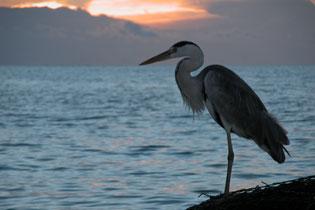 Heron_2005-08-3845