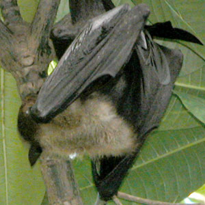 Bat_2005-08-3600