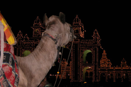 Palace_camel_2804