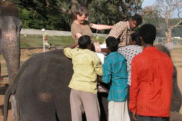 Mysore_elephant_2759