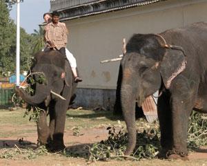 Mysore_elephant_2763