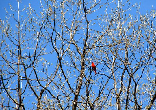 Cardinal 8-04-1177