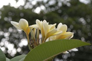 White_flower_2004-4295