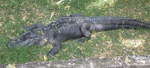 Crocs_grass_2004_0880