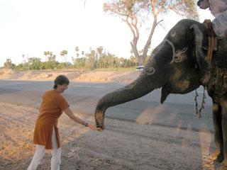 Kodai_elephant_me_1362