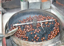 Malaysia_chestnuts2_2266