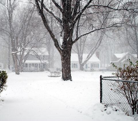 Snow8-11-8106