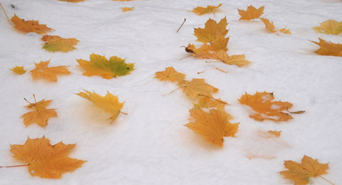 Snow8-11-8102