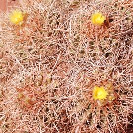 Desert8-07-5272