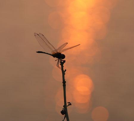 Dragonfly7-11-8547