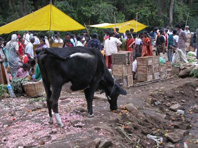 Market_cow_2004_1334