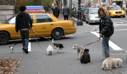 Nyc_dogs_367