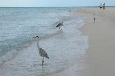 Heron_2005-08-3683