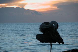 Heron_2005-08-3843