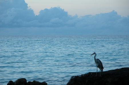 Heron_2005-08-3849