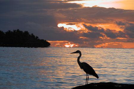 Heron_2005-08-3646