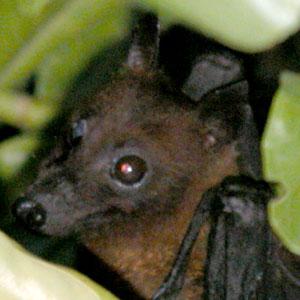 Bat_2005-08-3659
