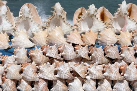 Shells_2005-09-4501
