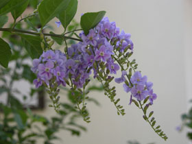 Purple_2004_02-0628