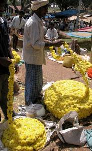 Yellow_garlands_2004-2653