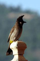 Kash_bird_7-04-2114