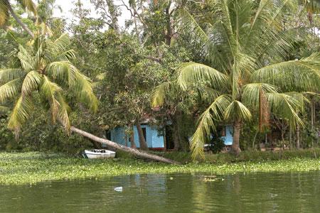 Kerala_blue_2006-01-0019
