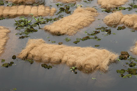 Coir_float_2006-01-0277