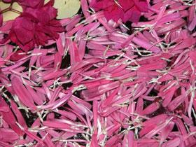 Pink_petals_2004_0734