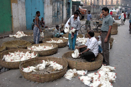 Image result for chicken shop kolkata