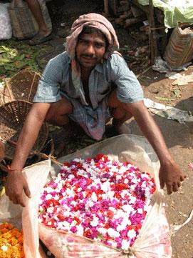 Flower_2006-11-5518