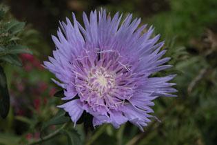 Purple_2004-2005