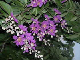 Purple_2004_1429