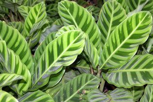 Green_leaves_2004-4282