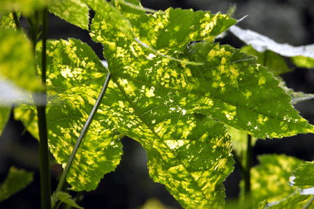 Green_leaf_2006-10-4762