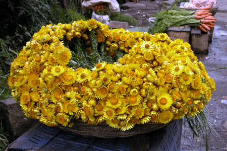 Yellow_flower_06-10-4550