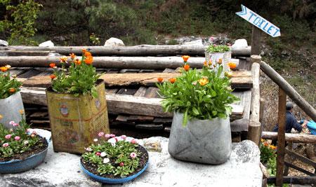 Flower_2006-04-1746