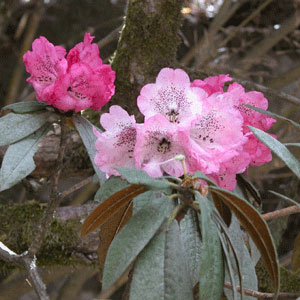 Flower_2006-04-1329