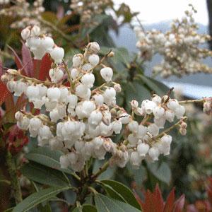 Flower_2006-04-1779