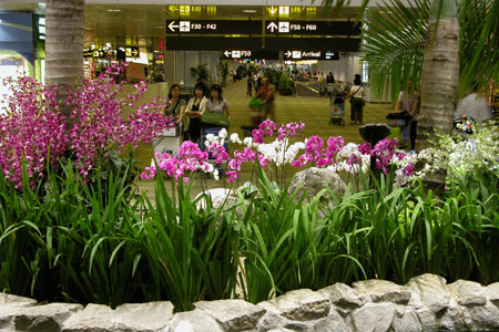 Changi_2006-07-2990