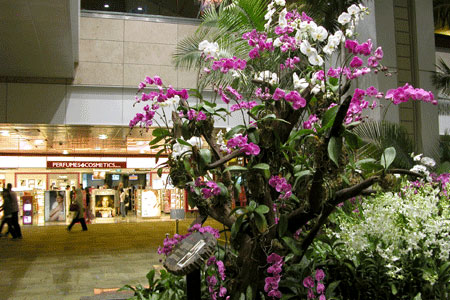 Changi_2006-07-3017