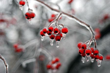 Ice_2007-01-0265
