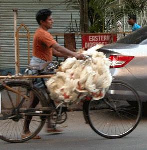 Kolkata_2006-10-5307