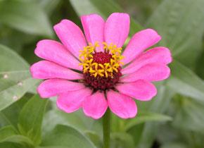 Kerala_flowers_p7_2004-1858