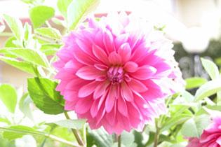 Kerala_flowers_p7_2004-1999