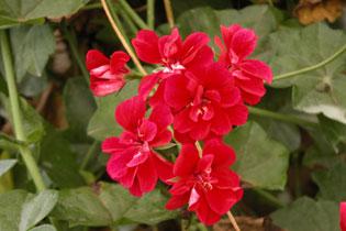 Kerala_flowers_p7_2004-2043