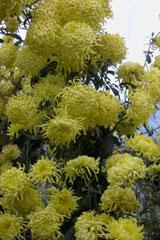 Kerala_flowers_p8_2004-2041