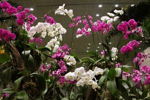Changi_2006-07-3019