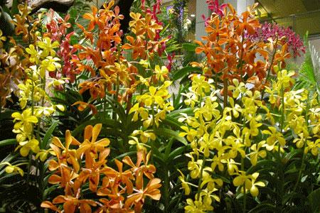 Changi_2006-07-2996